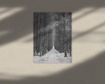 Het donkere Woud van BHotography