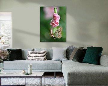 Papillon malachite (tiges de Siproeta) sur une fleur d'Hibiscus sur Flower and Art