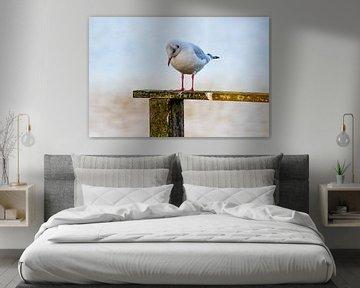 Die Möwe im Rampenlicht von PhotoManiX Digital Photography