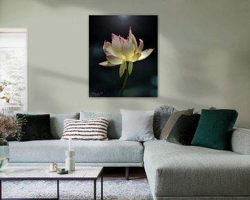 Le lotus sacré (Nelumbo nucifera) sur Flower and Art