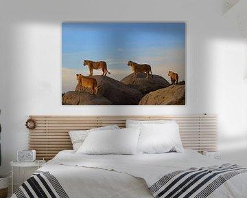 Lions van Sjoerd Reitsma