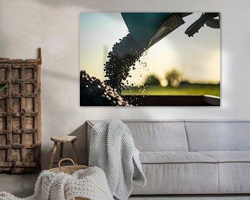 Druiven oogst van Stan van den Beld