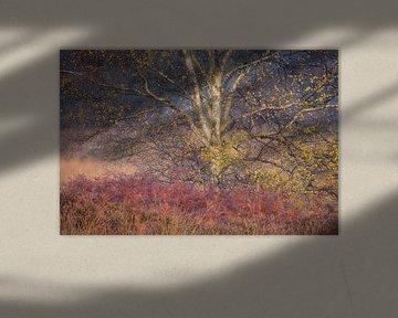 Close-up van een mooie berk op de Kampina met intense herfst kleuren.