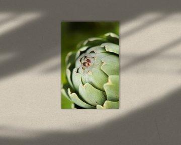 Artisjok Close Up van JPWFoto