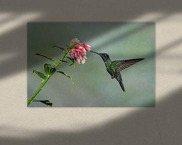 Kolibrie van Els Peelman
