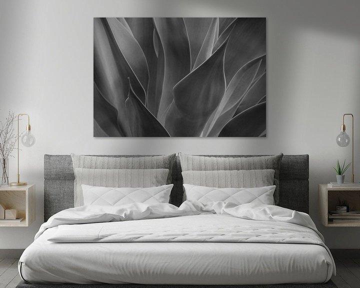 Beispiel: Agave abstrakt von Andreas Kilian