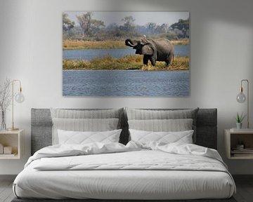 Trinkender Elefant im Okavango-Delta von Simone Meijer