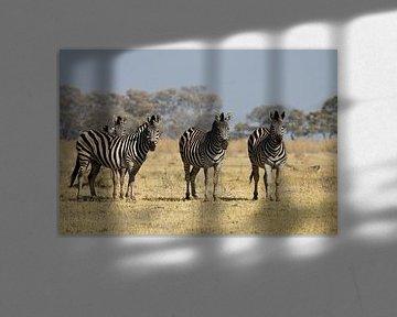 Zebras im Okavango-Delta von Simone Meijer