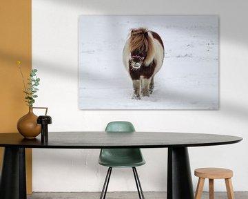 Pony in de sneeuw van Tessa Dommerholt