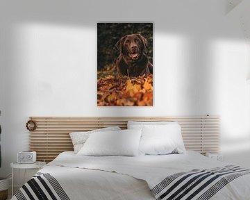 Bruine labrador van Tessa Dommerholt