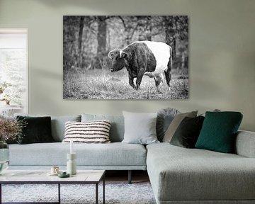 Kuh auf der Wiese von Sran Vld Fotografie