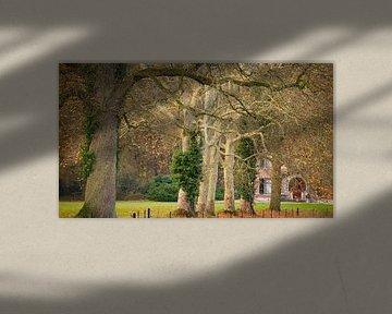 Verspielte Bäume entlang der Allee zu von Sran Vld Fotografie