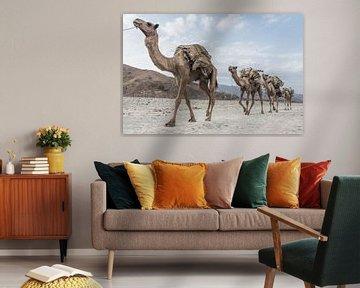 Kamelenkaravaan door de woestijn | Ethiopië van Photolovers reisfotografie