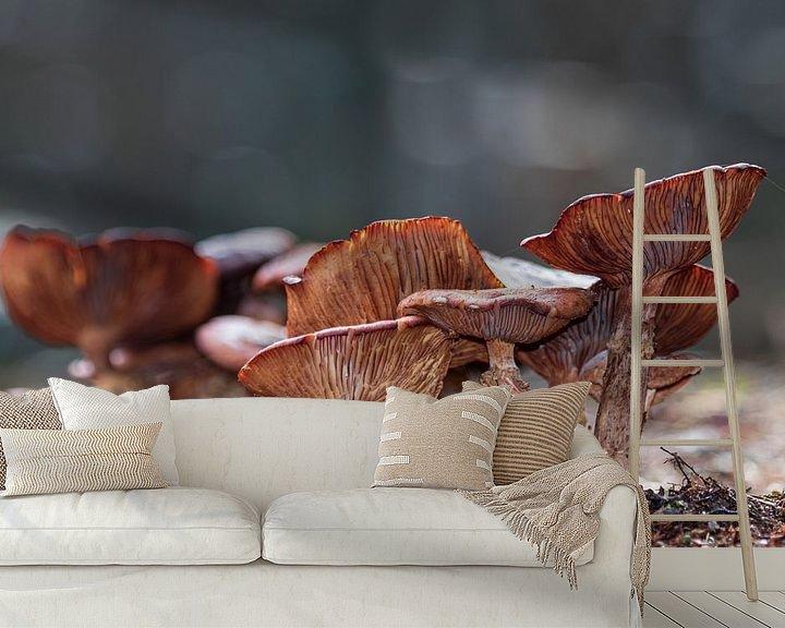 Impression: Champignon à lamelles brun sur Anjo ten Kate