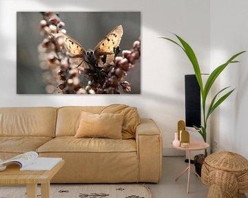 Hallo! Porträt eines Glühwürmchens im Moor von KB Design & Photography (Karen Brouwer)
