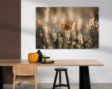 Schmetterling auf der sich in der Sonne erwärmenden Heide von KB Design & Photography (Karen Brouwer)