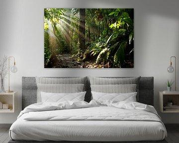 Rayons de soleil dans la jungle du Costa Rica sur Peter Schickert
