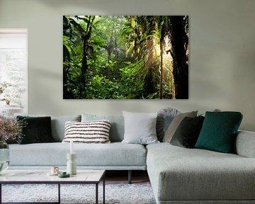 La lumière du soleil dans la jungle du Costa Rica sur Peter Schickert
