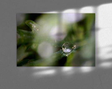 waterdruppels 2 van joyce kool