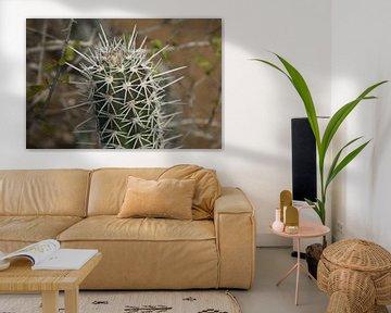 Kaktus von Johnno de Jong