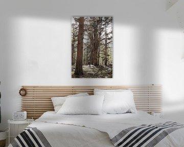 Wanderer umgeben von Baumriesen in den Wäldern der Sierra Nevada von Moniek Kuipers