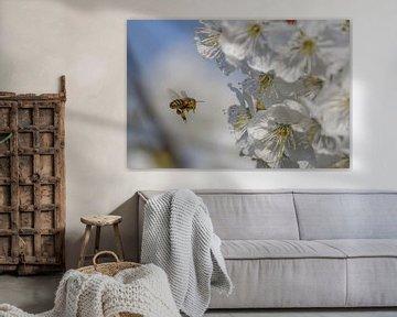 Bijen voor de bloesem van Ab Donker