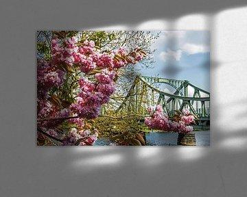 Glienicker Brücke mit Cherry Blossom