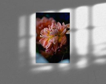 Blume als Stilleben von Moniek Kuipers