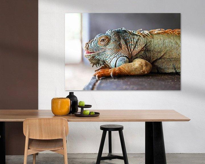 Beispiel: Grün-blauer und orangefarbener Leguan auf grauem Hintergrund von WorldWidePhotoWeb