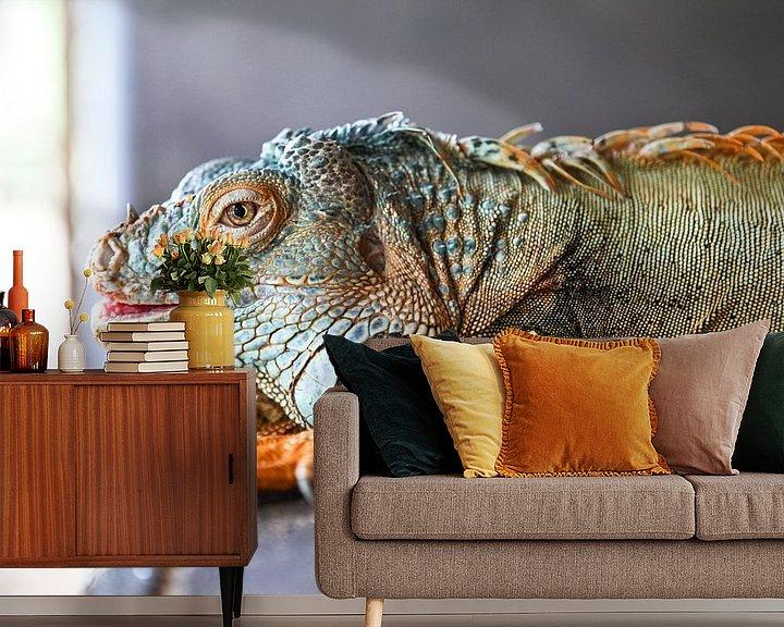 Beispiel fototapete: Grün-blauer und orangefarbener Leguan auf grauem Hintergrund von WorldWidePhotoWeb