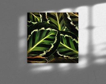 TROPICAL GREEN-GOLD LEAVES-2 von Pia Schneider