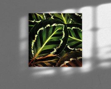 TROPICAL GREEN-GOLD LEAVES-1 von Pia Schneider