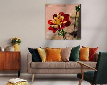 Blume im deutschen Blumengarten von Yannick uit den Boogaard
