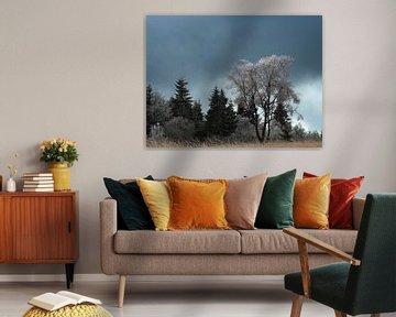 Een prachtige bevroren boom op de Hoge Venen in Belgie. van Jos Pannekoek