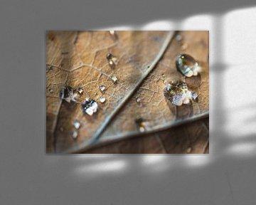 Herfstblad met waterdruppels van Anouschka Hendriks