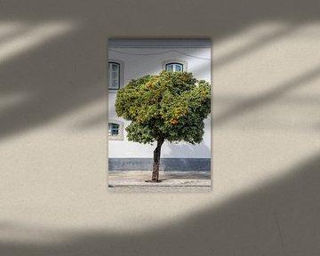 Bloeiende Sinaasappelboom in Portugal van Evelien Oerlemans