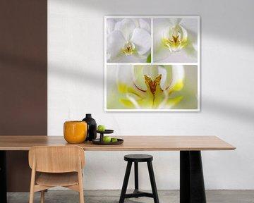 Orchidee 3 luik von Wiljo van Essen