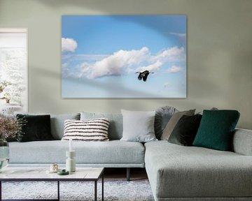 Ooievaar in de bewolkte lucht van Jürgen Schmittdiel Photography