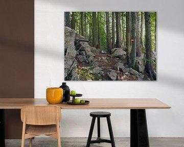 Bomen van Tim Lotterman Photography