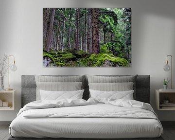 Ruig bos in het zwarte woud van Glenn Vlekke