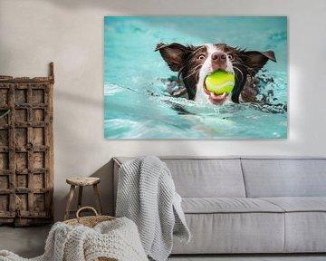Hundespritzer von Zsa Zsa Faes