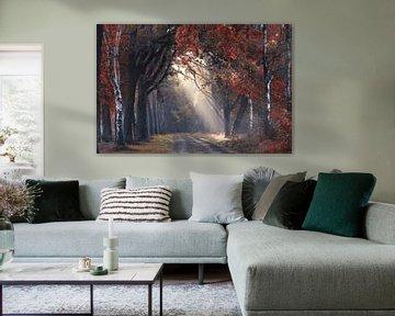 Kijkje door de herfst van Rob Visser