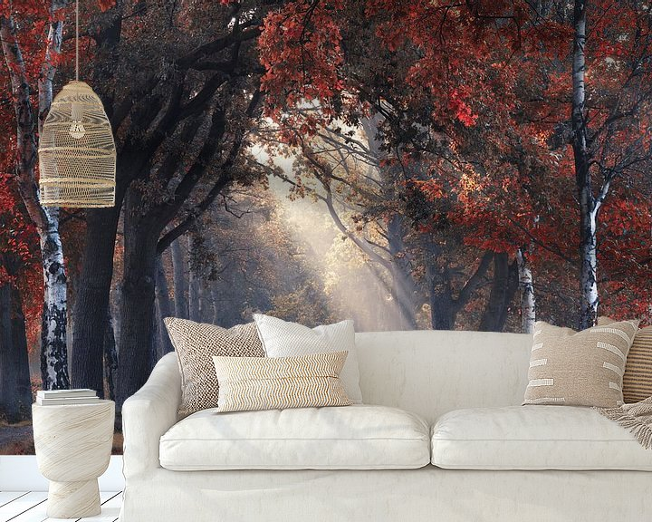 Sfeerimpressie behang: Kijkje door de herfst van Rob Visser