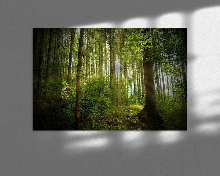 Beispiel: Frühling in der Natur von Andreas Kilian