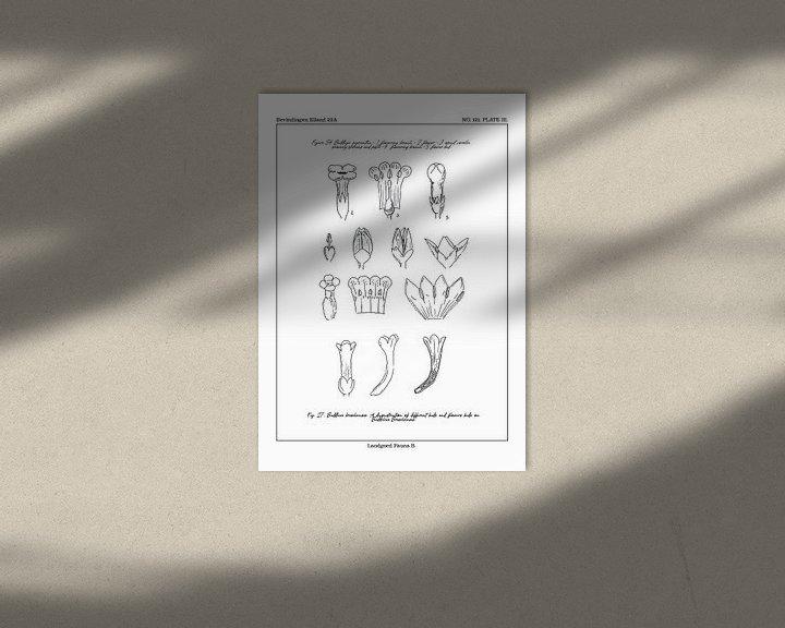 Sfeerimpressie: Flores notitia kaart B van Zoë Hoetmer