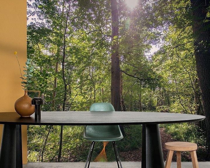 Beispiel fototapete: Typisch niederländische Wälder in Oirschot von Angela Kiemeneij