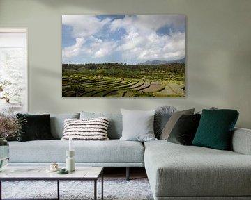 Mooi landschap met groene rijstterrassen, Bali, Indonesië. Unesco-wereldsite van Tjeerd Kruse