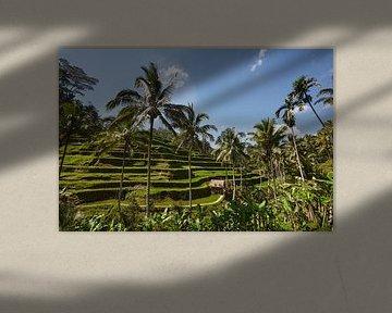 Tegallalang, Ubud, Bali. De meest dramatische en spectaculaire rijstterrassen in Bali van Tjeerd Kruse