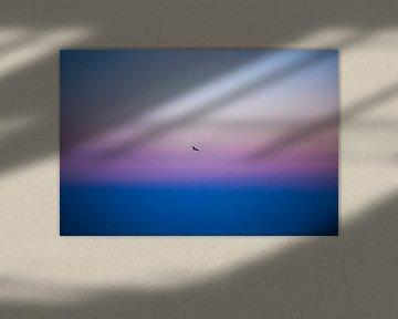 Möwe am Morgen von Colin Eusman