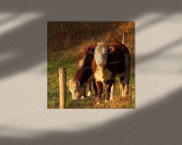 Beispiel: Kühe von Diana Kors